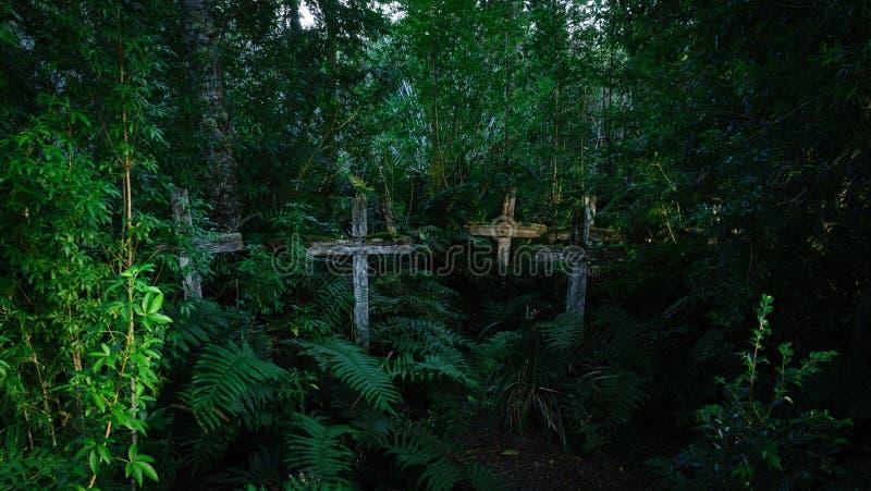 Wilde begraafplaats met houten kruisen van anonieme poorten in een vochtig bos of jungle stock foto