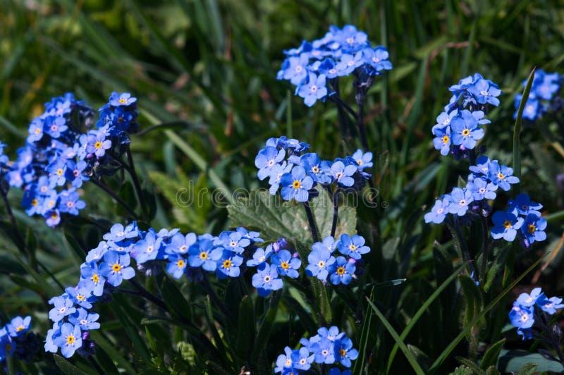 Wilde bergbloemen royalty-vrije stock afbeeldingen