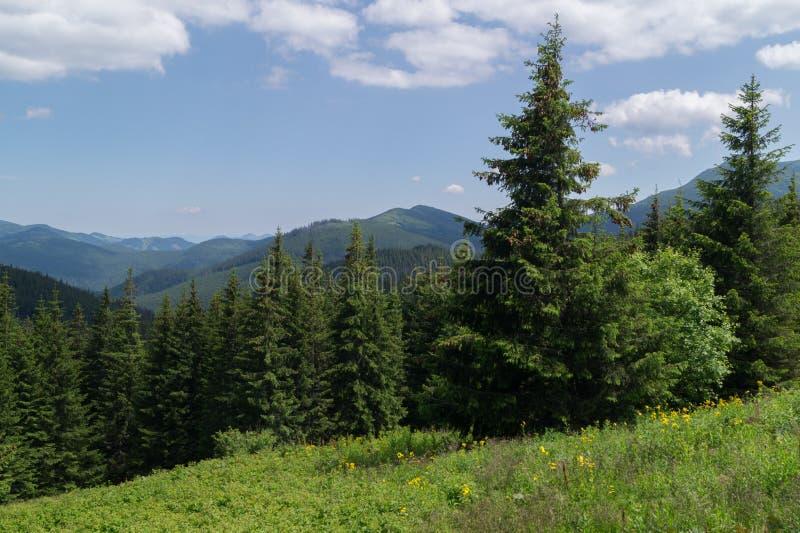 Wilde bergen stock foto