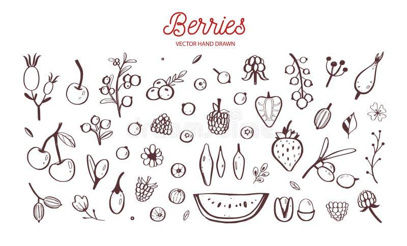 Wilde Bessen en vruchten vectorreeks De framboos, de Kers, de aardbei, de braambes en andere zomer oogsten getrokken Hand royalty-vrije illustratie