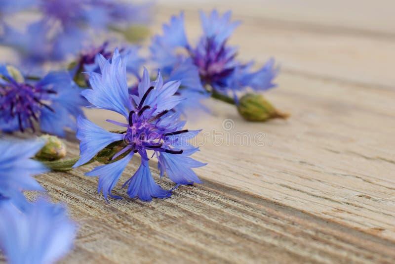 Wilde blaue Kornblume schloss oben stockfoto