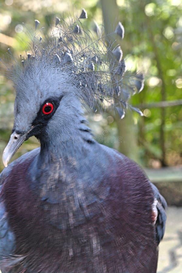 Wilde blauwe vogel in Jurong-Vogelpark, Singapore stock foto's