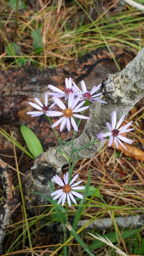 Wilde bloem stock foto's