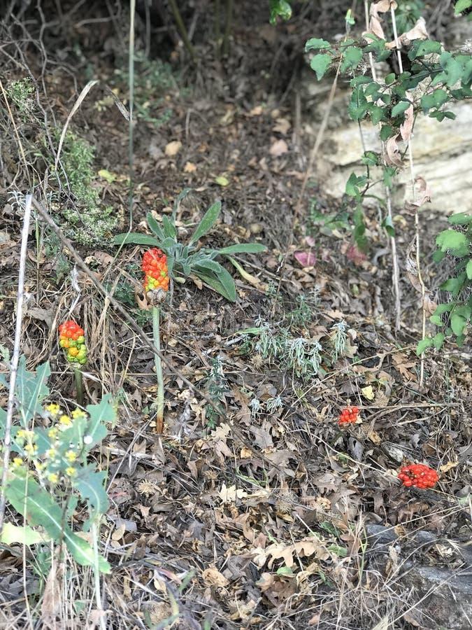 Wilde bloem stock afbeeldingen