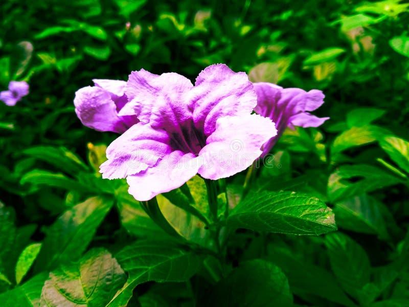 Wilde bloem stock fotografie