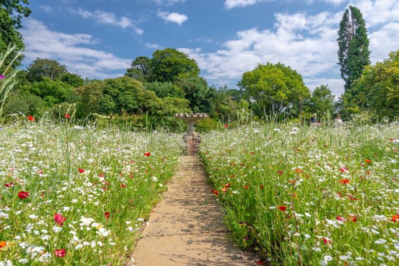 Wilde bloem, Bodnant-tuin, Wales stock fotografie