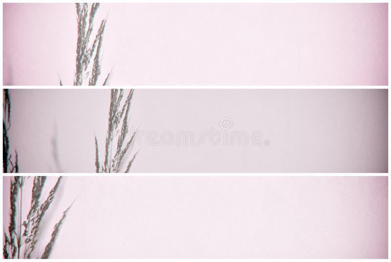 Wilde bloem in multilenseffect met exemplaarruimte voor achtergronddoeleinden stock foto