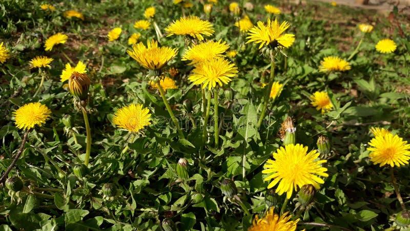 Download Wilde Bloemen stock afbeelding. Afbeelding bestaande uit bloemen - 114225201