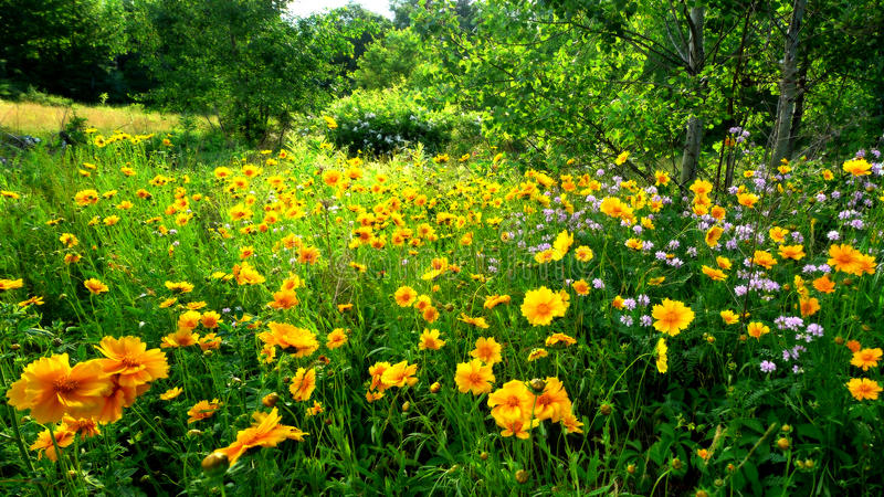 Wilde Bloemen stock afbeelding