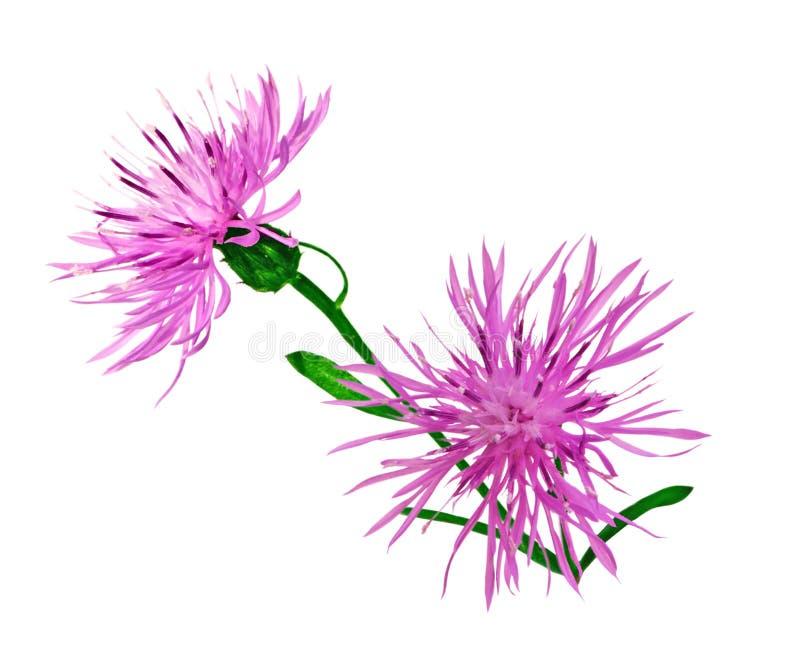 Wilde bloemen stock foto's