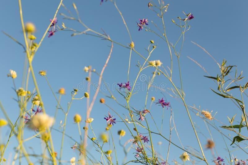 Wilde bloemen bij de weide stock fotografie