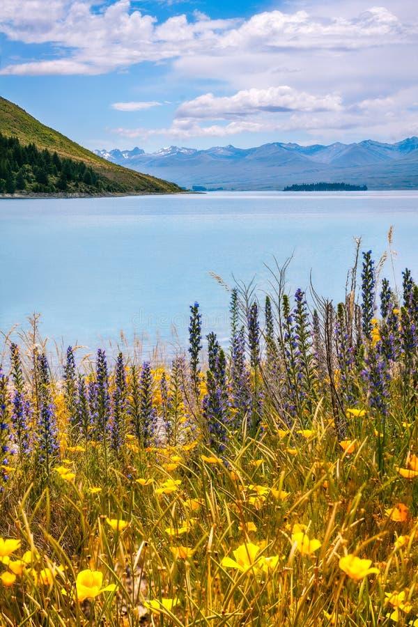 Wilde Bloemen bij Meer Tekapo stock afbeelding