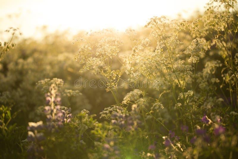 Wilde bloemen in de zomer stock afbeeldingen