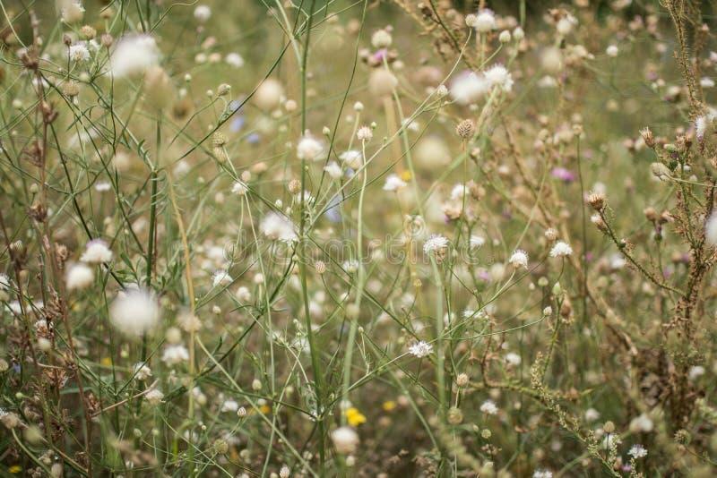 Wilde Bloemen in de Zomer stock afbeelding