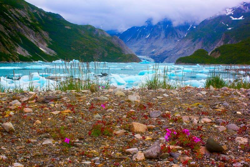 Wilde bloemen dichtbij gletsjer Mc'Bride in het Nationale Park van de Baai van de Gletsjer. stock foto's