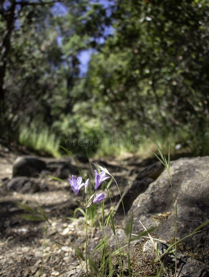Wilde bloemen die dichtbij sleep wandelen royalty-vrije stock afbeelding