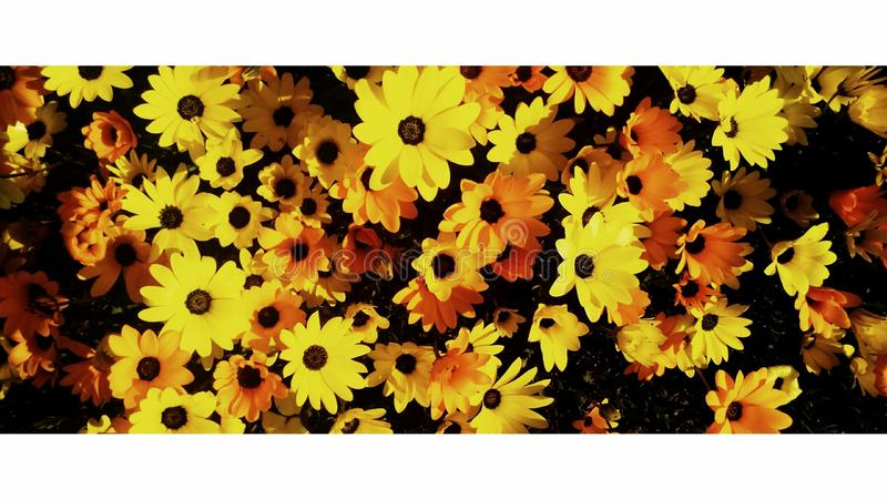 Wilde bloemen door de snelweg stock fotografie