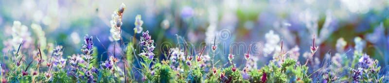 Wilde bloemen en grasclose-up, horizontale panoramafoto stock fotografie