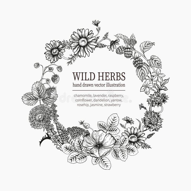 Wilde Bloemen Horsetail infusie in een glaskop royalty-vrije stock afbeeldingen
