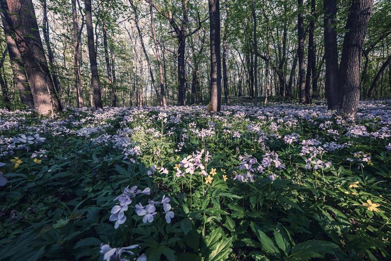 Wilde bloemen in hout stock foto's
