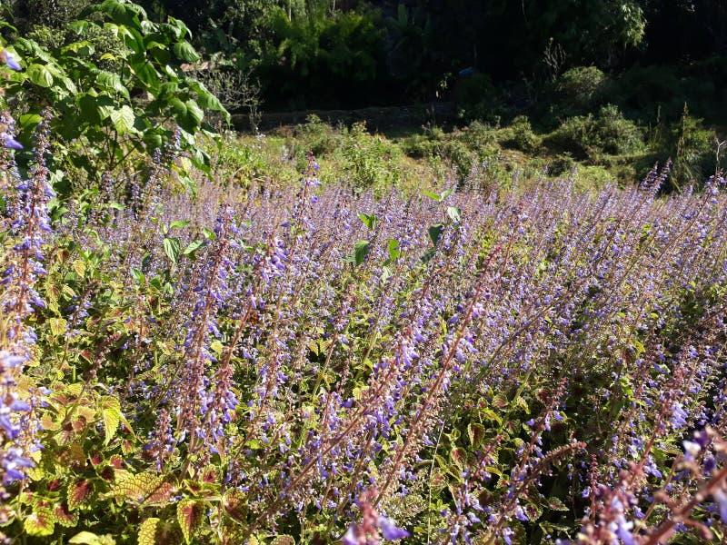 Wilde bloemen in landbouwgronden royalty-vrije stock fotografie