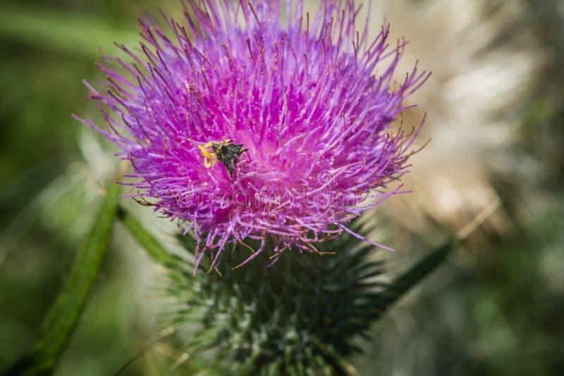 Wilde Bloemen met een insect stock afbeelding