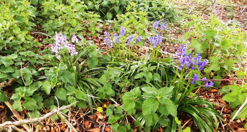 Wilde bloemen nr Crookham, Northumberland het UK stock foto