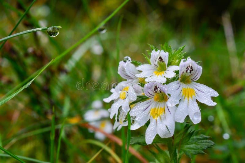 Wilde bloemen in ochtenddauw royalty-vrije stock foto