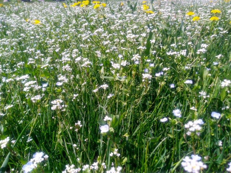 Wilde bloemen onder de zon stock fotografie