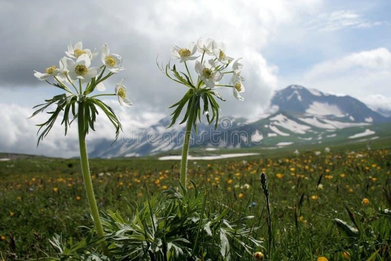 Wilde bloemen op bergachtergrond royalty-vrije stock afbeelding