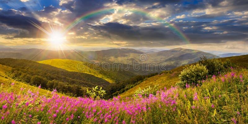 Wilde bloemen op de bergbovenkant bij zonsondergang royalty-vrije stock foto's