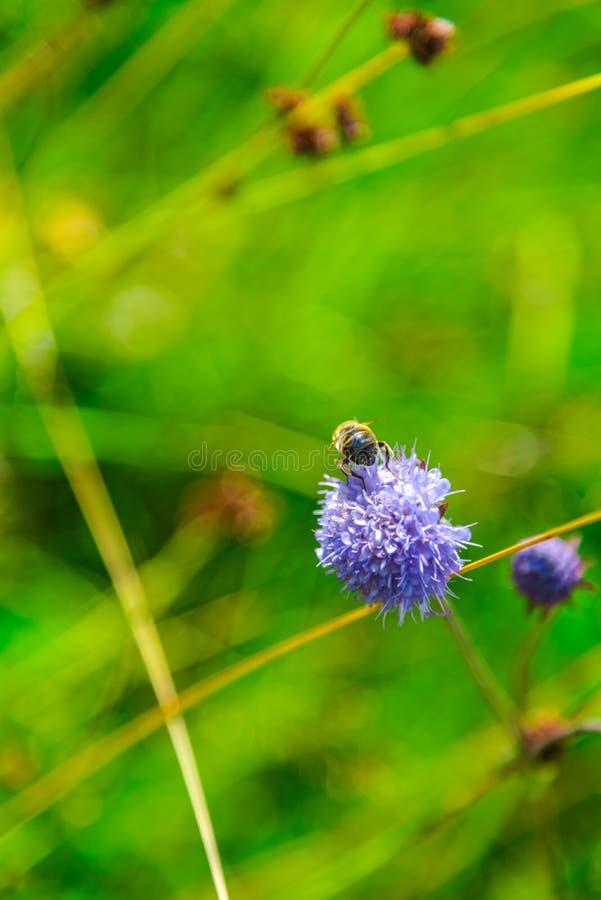 Wilde bloemen op de bergen in de zomerdag royalty-vrije stock foto's