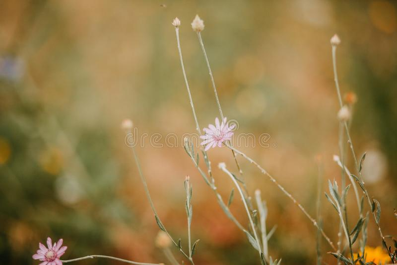 Wilde bloemen op een achtergrond stock foto