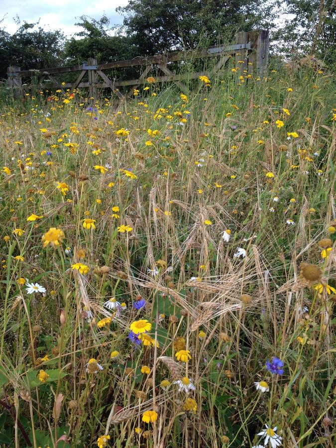 Wilde bloemen op een gebied stock foto
