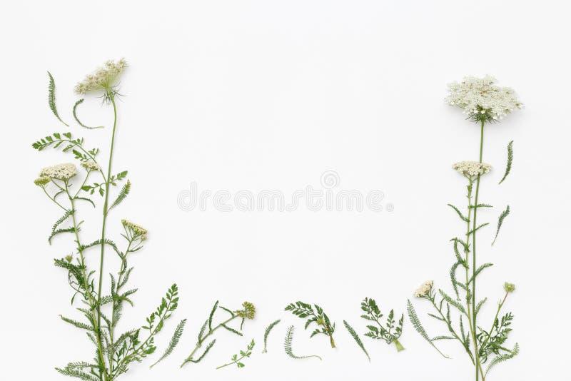 Wilde bloemen op witte achtergrond De hoogste vlakke mening, legt royalty-vrije stock afbeelding