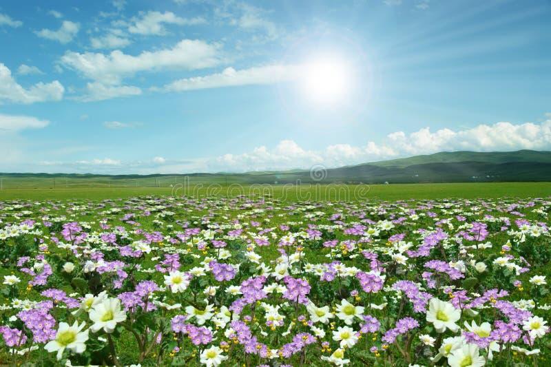 Wilde bloemen overal royalty-vrije stock afbeelding