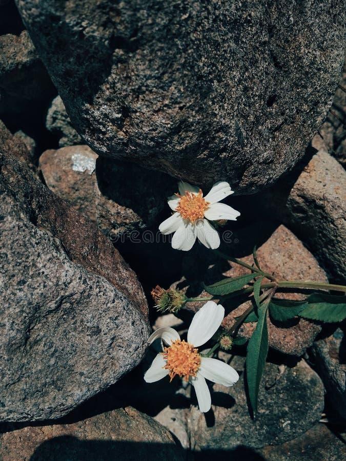 Wilde Bloemen royalty-vrije stock foto's