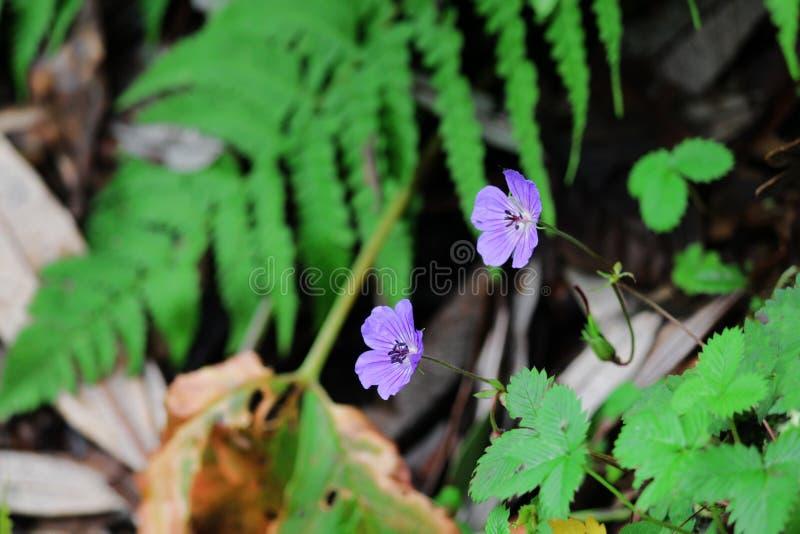 Wilde bloemen van triund stock foto
