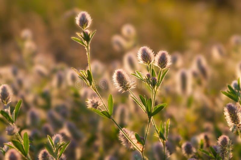 Wilde bloemen in zonweide De achtergrond van het ochtendgebied royalty-vrije stock foto's
