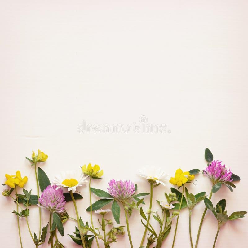 Wilde bloemenhoek op document achtergrond stock afbeeldingen