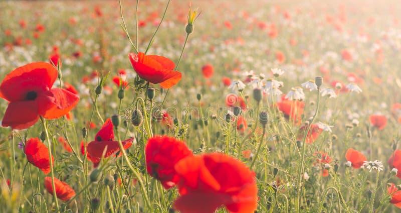 Wilde bloemenweide royalty-vrije stock foto