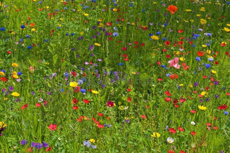 Wilde bloemweide stock afbeelding