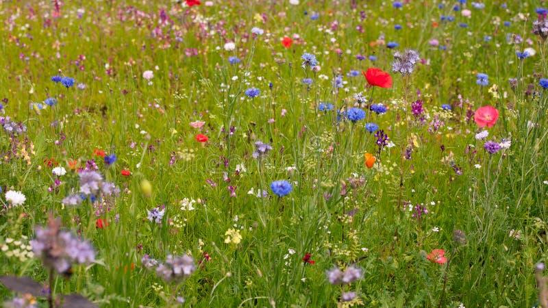 Wilde bloemweide royalty-vrije stock afbeeldingen