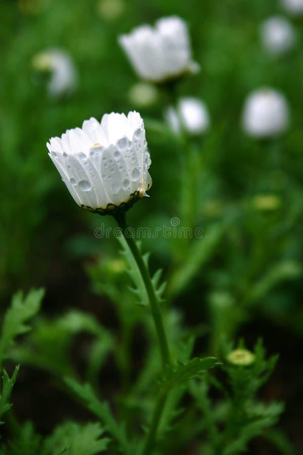 Wilde Blume stockfoto