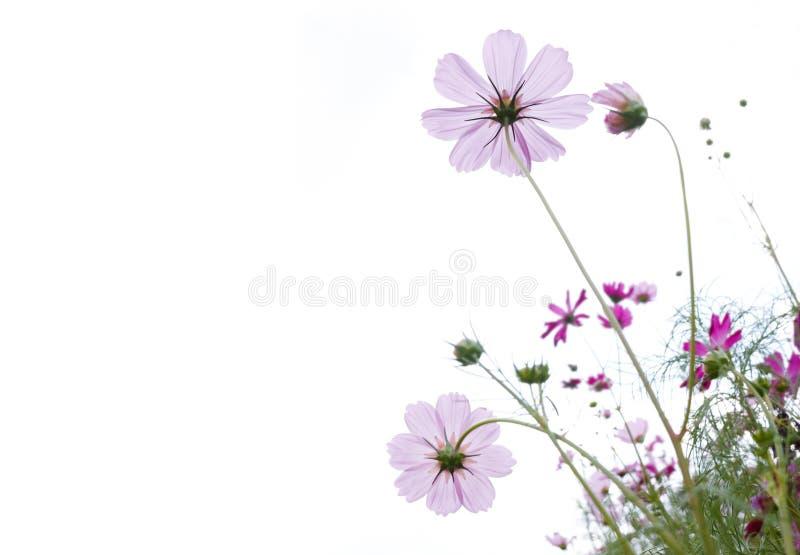 Wilde Blume lizenzfreie stockfotos