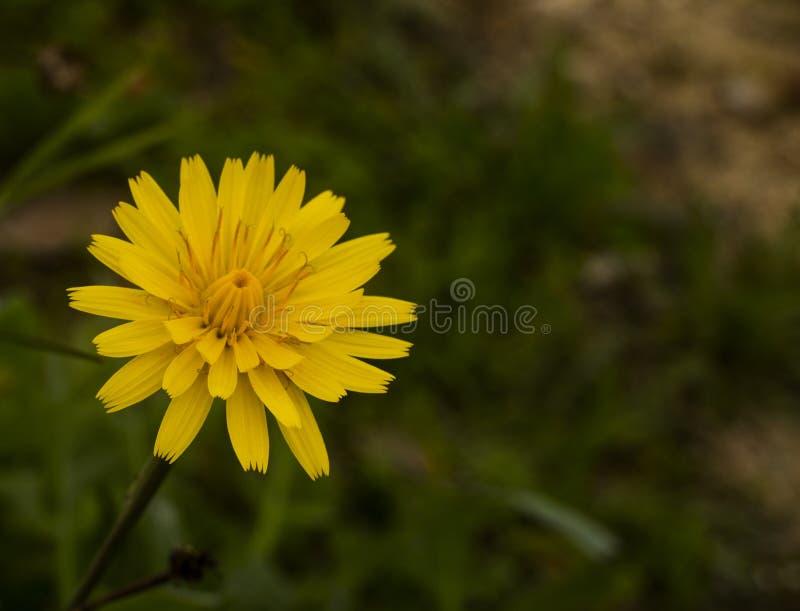 Wilde Blume nahe einem Bettfluß lizenzfreie stockbilder
