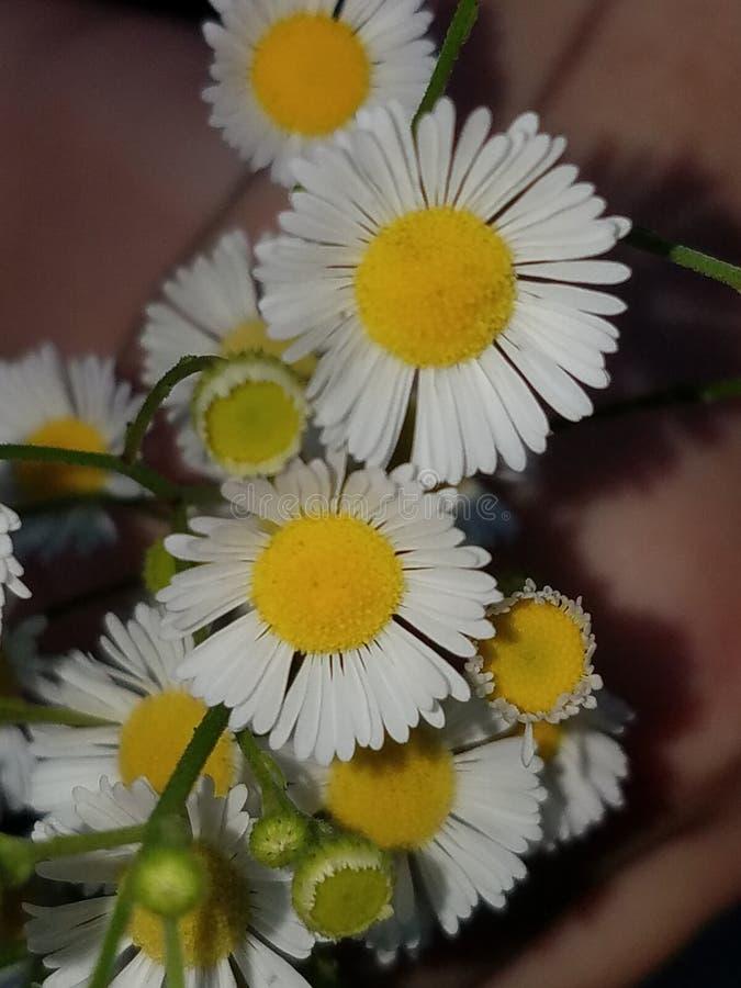 Wilde Blumen lizenzfreies stockbild