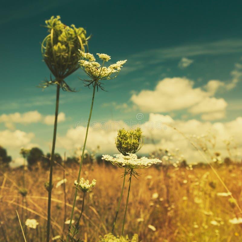 Wilde Blumen auf der Sommerwiese lizenzfreie stockbilder