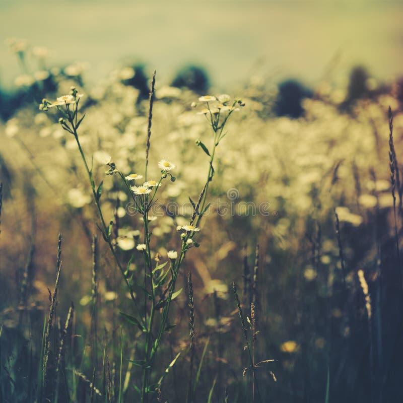 Wilde Blumen auf der Wiese lizenzfreie stockfotos