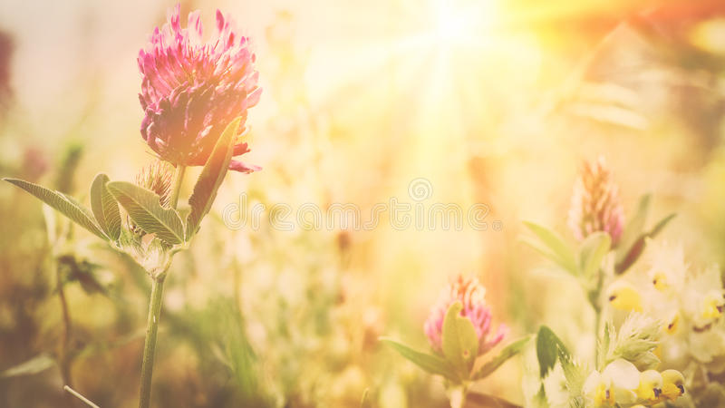Wilde Blumen auf der Wiese stockfotografie